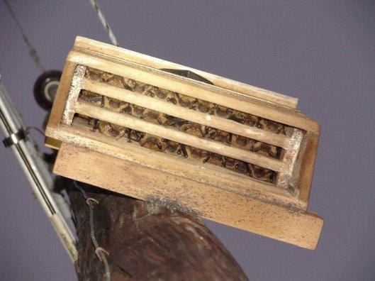 Bats in a bat house
