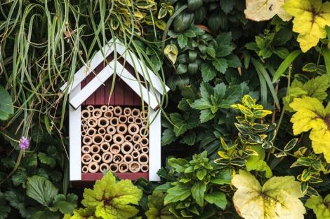 Ladybug-tube-home